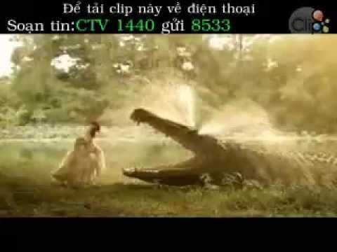 Tình yêu gà vịt với nước mắt cá sấu