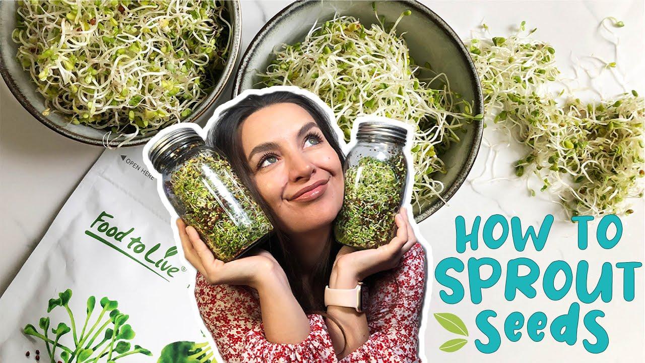 Kosher Non-GMO 1 Pound Bulk Vegan Organic Alfalfa Sprouting Seeds Raw