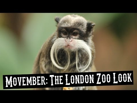 Movember: How To Get the London Zoo Look!