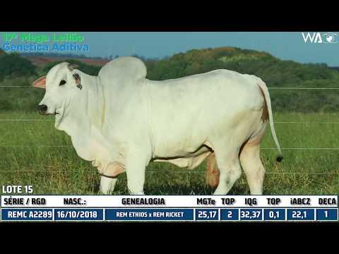 LOTE 15 - REMC A 2289 - 17º Mega Leilão Genética Aditiva 2020