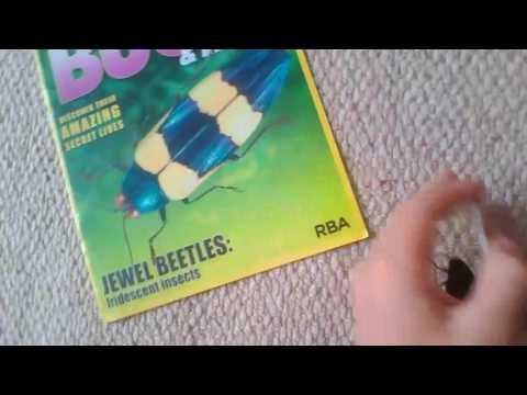 Bugs-Jewel Beetle