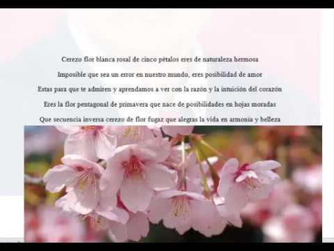 Poema: Cerezo de flor eres de naturaleza inversa - YouTube