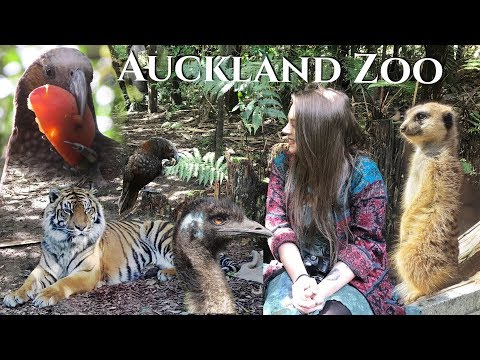 Auckland Zoo- Day 9 Adventure to New Zealand.