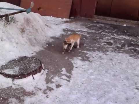 Весна - кот дерет кошку!