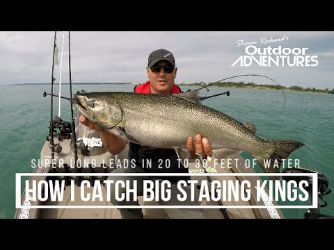 How I Catch Big Staging Salmon, Fishing Solo On Lake Ontario. Long Leads In Skinny Water - Pickering