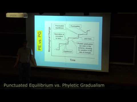 Punctuated Equilibrium vs. Phyletic Gradualism (long version)
