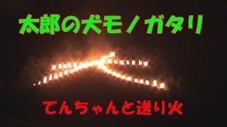 【柴犬子犬】てんちゃんと五山の送り火 太郎の犬モノガタリ#45 thumbnail