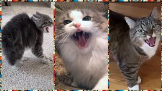 Funny Angry Cats Compilation | Cats Hissing Compilation...... Animals #38