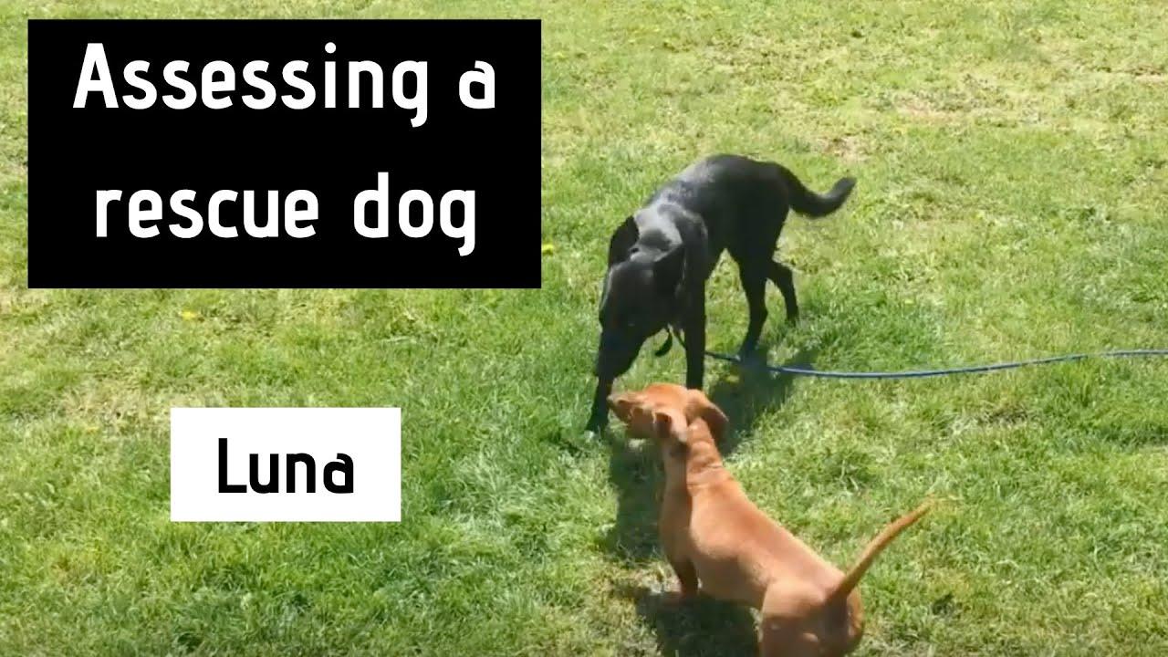 Luna - Assessing a Rescue Dog