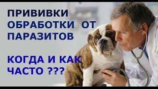 Моя собака. Когда ставить щенку прививки. Ветобслуживание.