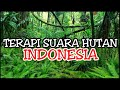 Terapi Suara Hutan Belantara Cocok Untuk Masteran Burung Peliharaan Anda Agar Kembali Gacor  Mp3 - Mp4 Download