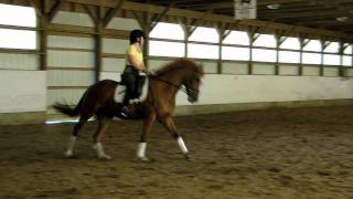 Bel Canto - 2006 Sport Pony For Sale