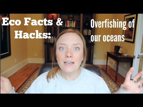 Eco Facts&Hacks: Overfishing Our Oceans