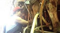 Si Analee @ Milking the cow Pt.2 - August 2015 - Mesa, Arizona