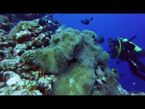 Raiatea 2014 MiriMiri Reef