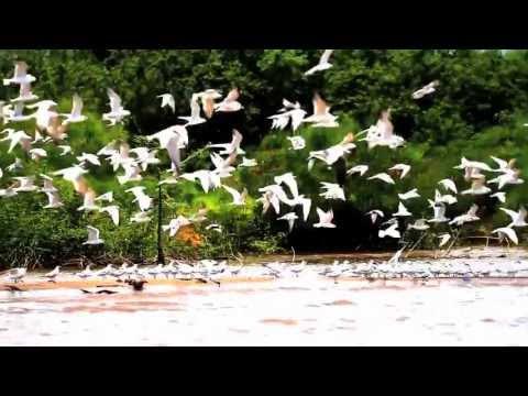 DRAW THE LINE - Save Virunga National Park