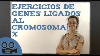 Ejercicios de genes ligados al cromosoma X