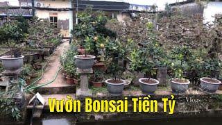 Vườn Cây Bonsai Tiền Tỷ Ở Nam Toàn Nam Trực Nam Định