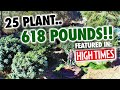 "Capture de la vidéo 25 Plant ""618""lb. Mendo Dope Marijuana Garden Featured In High Times Magazine."