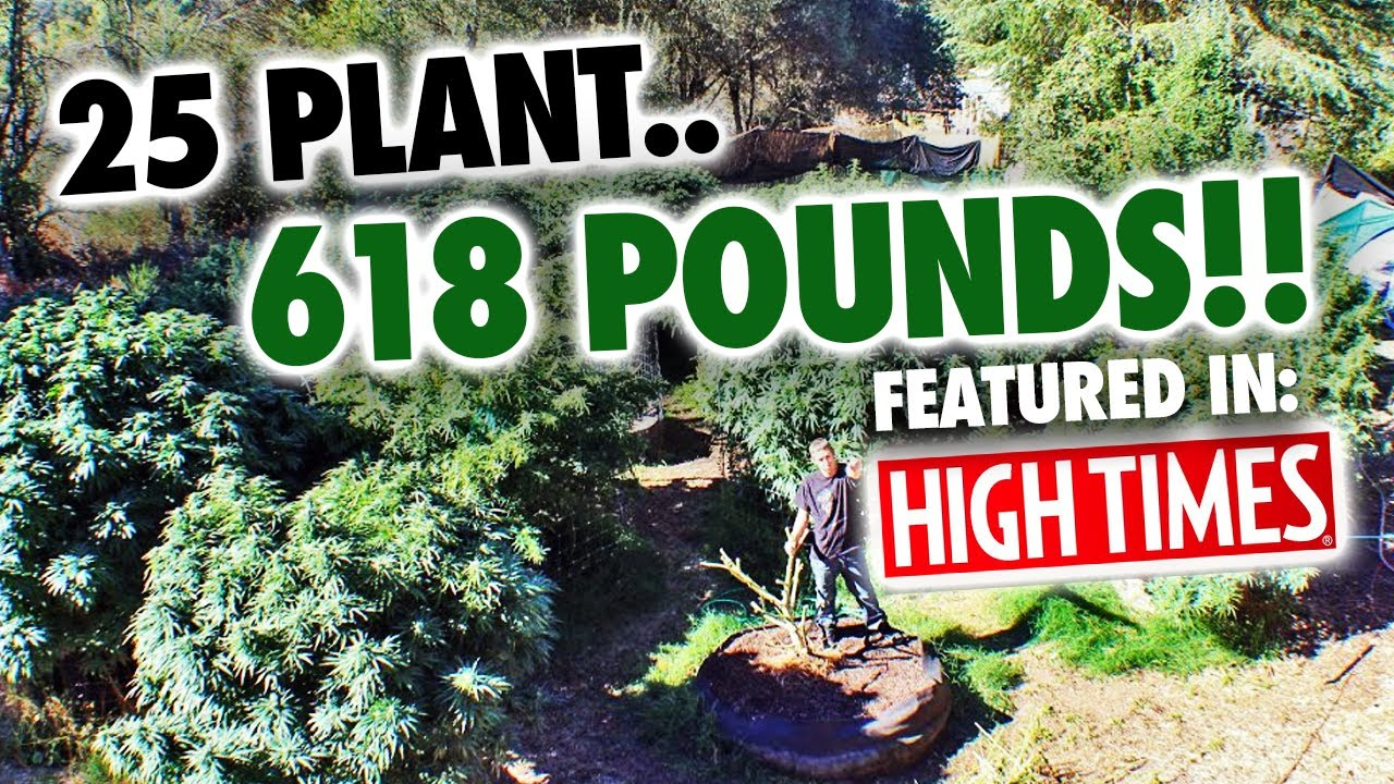 25 Plant Quot 618 Quot Lb Mendo Dope Marijuana Garden Featured In