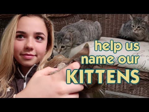 It's Naming Our New Kittens!! What Do You Think?