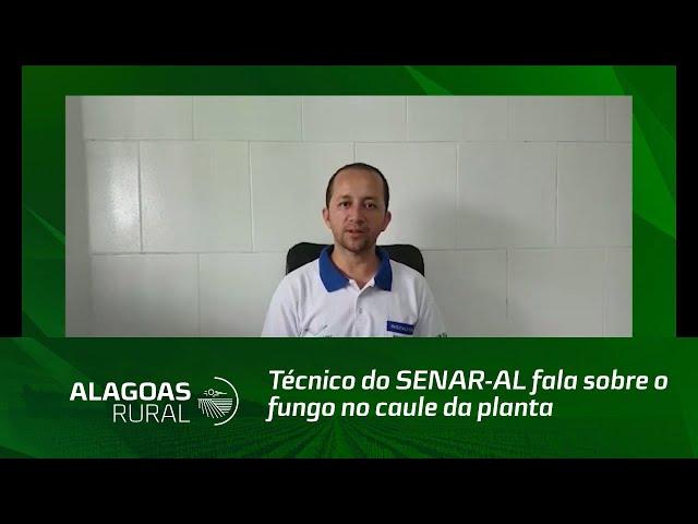 Técnico do SENAR-AL fala sobre o fungo no caule da planta