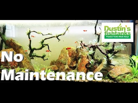No Maintenance Aquarium Update- Your Momma (my momma) and  No Maintenance Fish tank