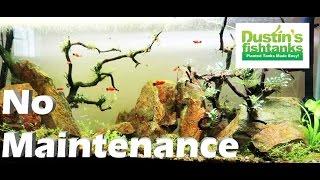 No Maintenance Aquarium Update- Your Momma (my momma) and  No Maintenance Fish tank thumbnail