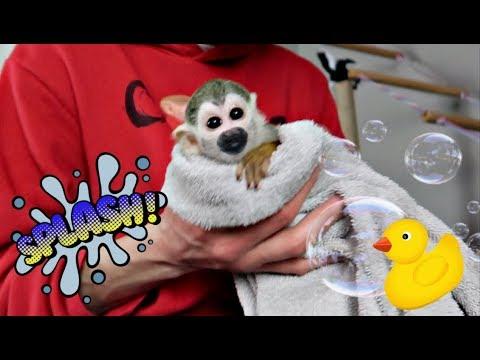 Baby Monkey oLLie Baby Bath & Diaper Training