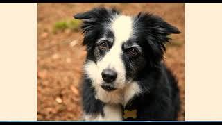 Правильное кормление собак. Витамины и минералы