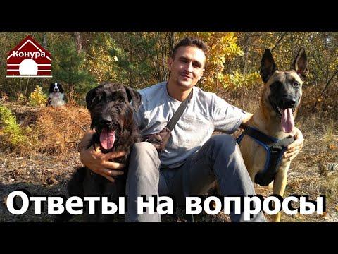 Дрессировка и воспитание собак, Ответы на вопросы подписчиков