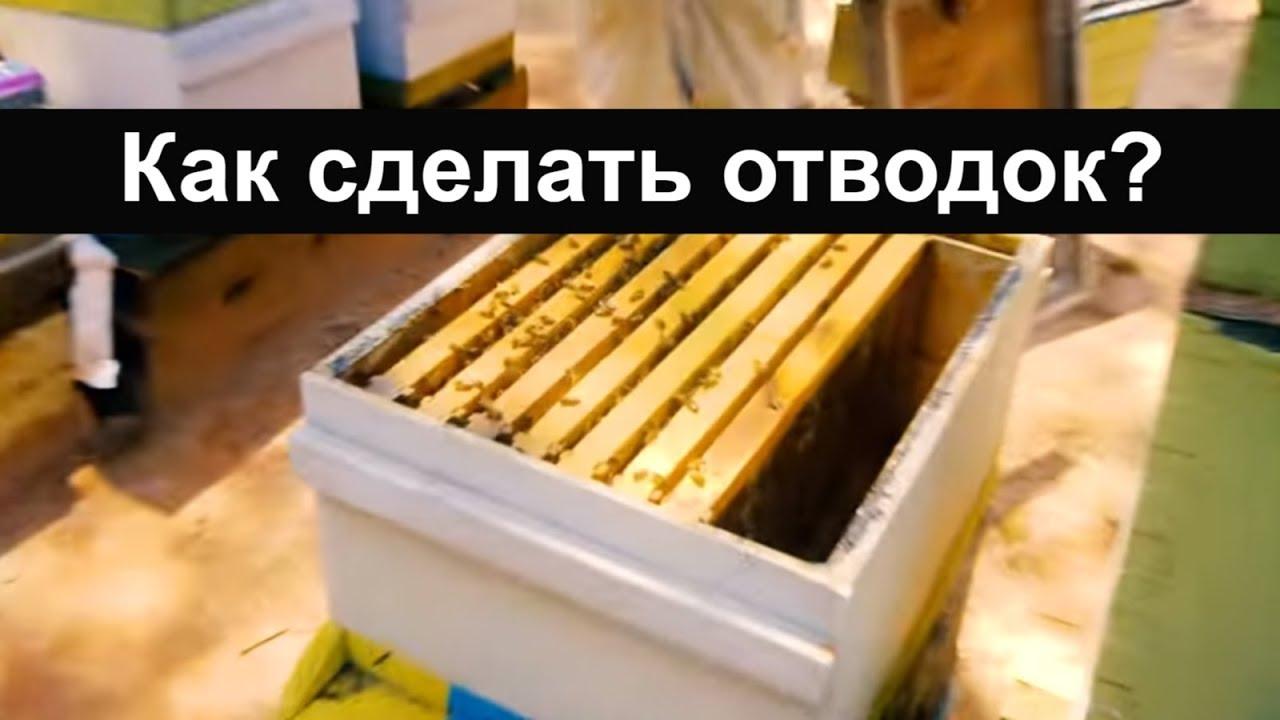 Как сделать отводок пчел без матки фото 476