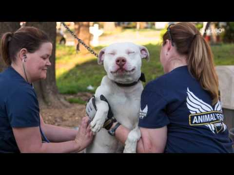 The moment 22 abandoned dogs realize they're being rescued is priceless