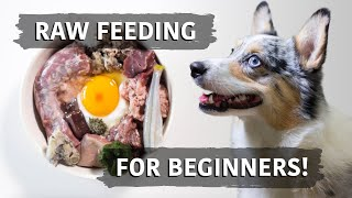 Raw Food Diet For Dogs  Balancing Explained For Beginners