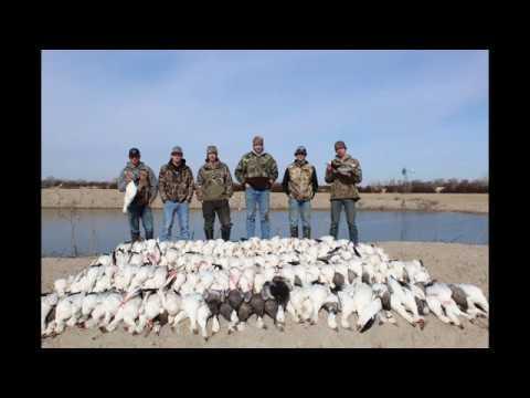 Farm Pond Snow Goose Jump (301)
