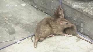 20160909 我爱发明  捉鼠怪匣
