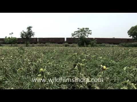 Goods train passing through fields, India