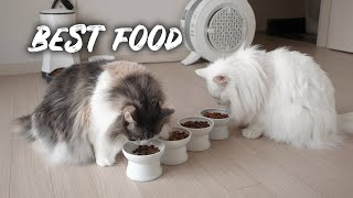 Cats choosing best food to eat daily | Norwegian Forest Cats