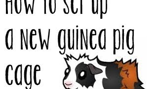Preparing for a New Guinea pig: setting up an indoor cage