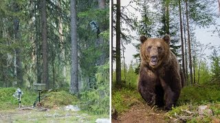 British Student's How To Make Bear Proof Camera