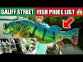 GALIFF STREET KOLKATA MONSTER FISH SELLER Dhimu Adik 9051174296 Red Eared Slider, Gar, Arowana