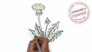 Нарисованные цветы  Как нарисовать распустившийся одуванчик карандашом поэтапно(Как нарисовать дружную семью поэтапно карандашом за короткий промежуток времени. Видео рассказывает о..., 2014-07-02T05:48:36.000Z)