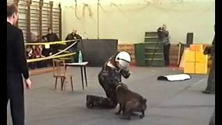 Bodyguard Police K9 Dogs Training