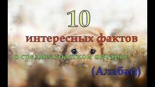 видео Животные побережья черного моря интересные факты