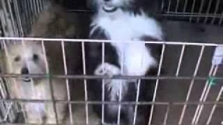 珍犬チベタン、テリアの5ヶ月.