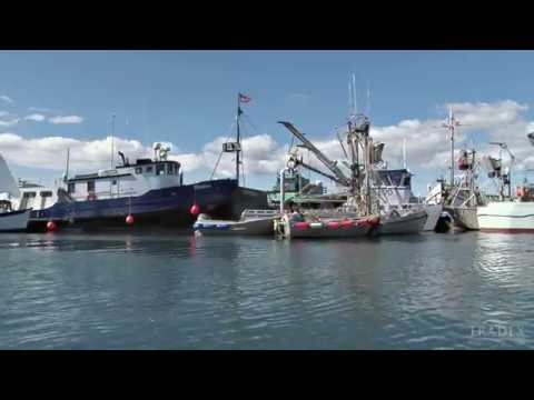 3MMI - Alaskan Whitefish Shortages As Processors Switch Focus To Salmon