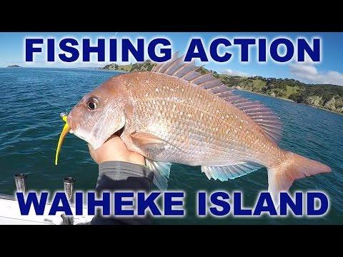 FISHING ACTION - WAIHEKE ISLAND SNAPPER, NZ