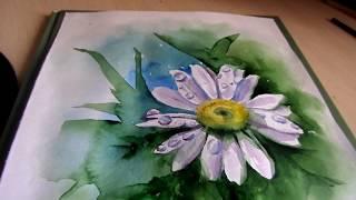 Рисуем ромашку. Евгения Кузьмина . Магия акварели. Magic  of watercolor. Draw flowers.