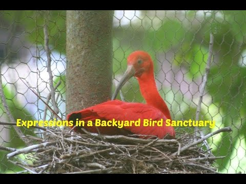expressions in a backyard bird sanctuary youtube