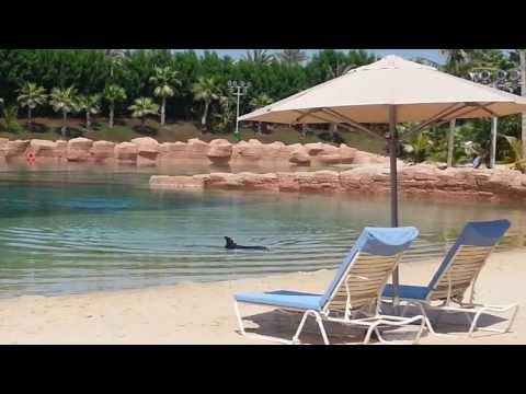 Dolphin Bay at Aquaventure Atlantis Dubai